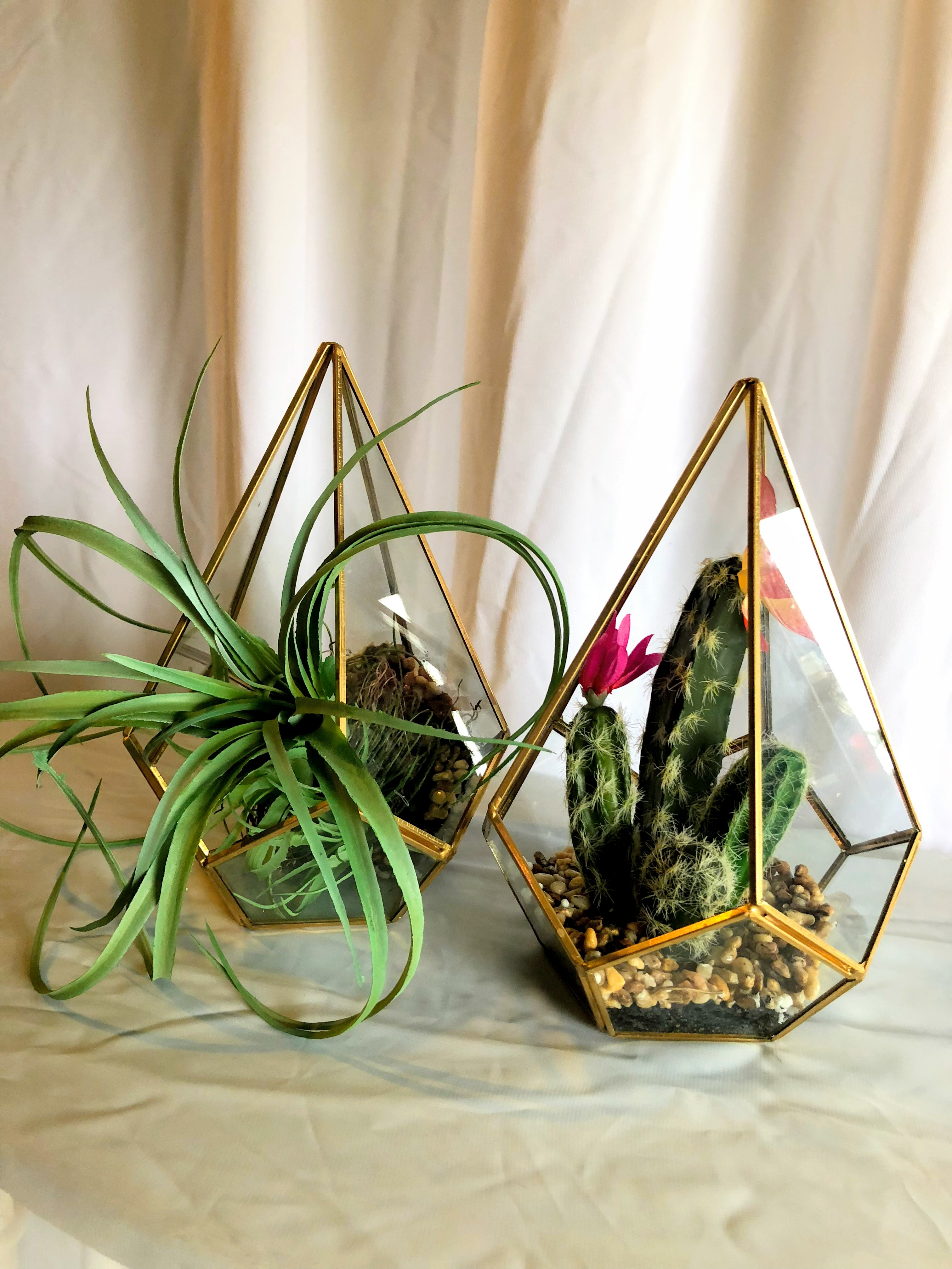 Gold Terrariums with Plants